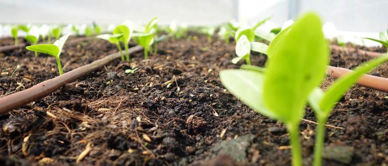 Bã trà là nguồn cung cấp dinh dưỡng cực kỳ đối với cây trồng