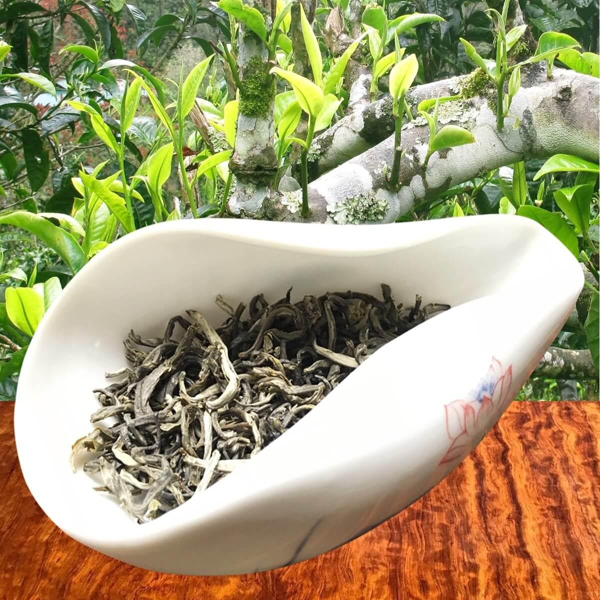 Đặc trưng và công dụng của Trà Shan Tuyết